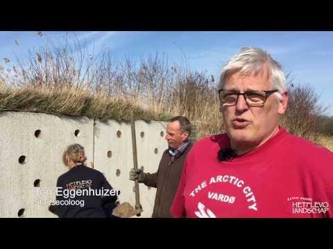 Oeverzwaluwenwand bij Kamperhoek is weer broedklaar