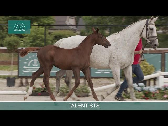 Talent STS