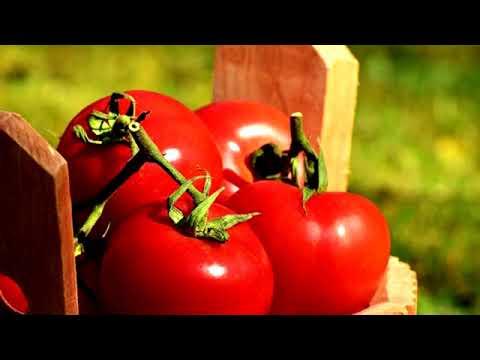 Concime per pomodori, tutti i consigli.