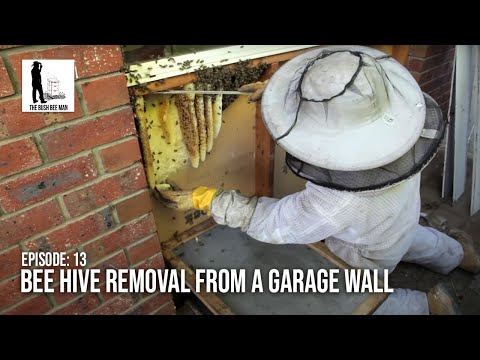 Removing a Wild Bee Hive