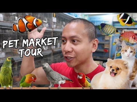Pet Market Tour   Vlog #370