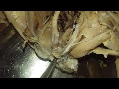 Sonnik pinangarap parasito
