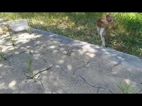 Come chiedere se il gatto ha vermi