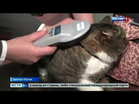 В Ростовской области специалисты Управления Россельхознадзора напомнили гражданам о правилах перевозки домашних животных авиатранспортом