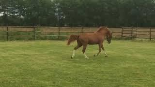video of Kronprinz 94