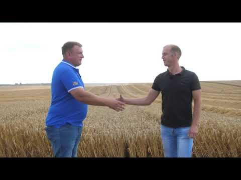 Как получить урожайность озимой пшеницы 95 ц\га ? Поле покажет всё!