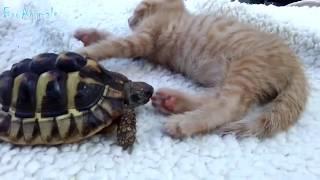 Смотреть видео. ПРИКОЛЫ С ЖИВОТНЫМИ   FUN WITH ANIMALS #37