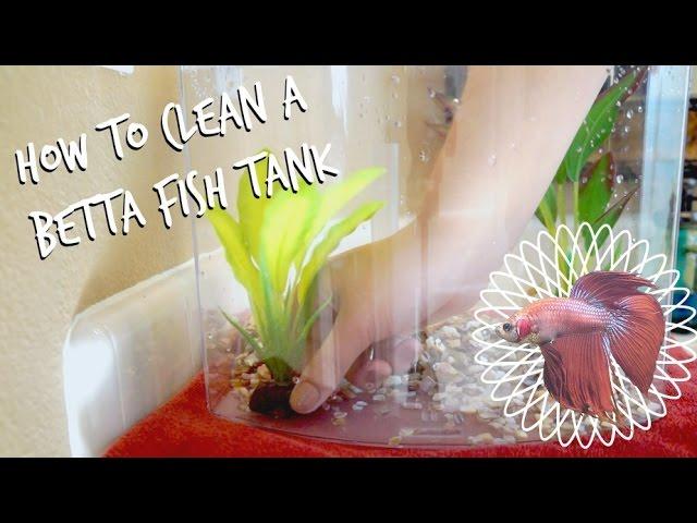Petsmart Aquatic Videos