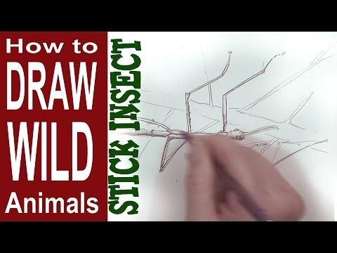 how to draw a stick insect (Intermediate - Spoken Tutorial)