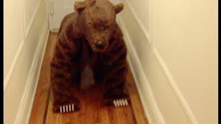 Dog Vs. Bear Costume