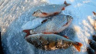 Рыбалка по первому льду на белоярском водохранилище