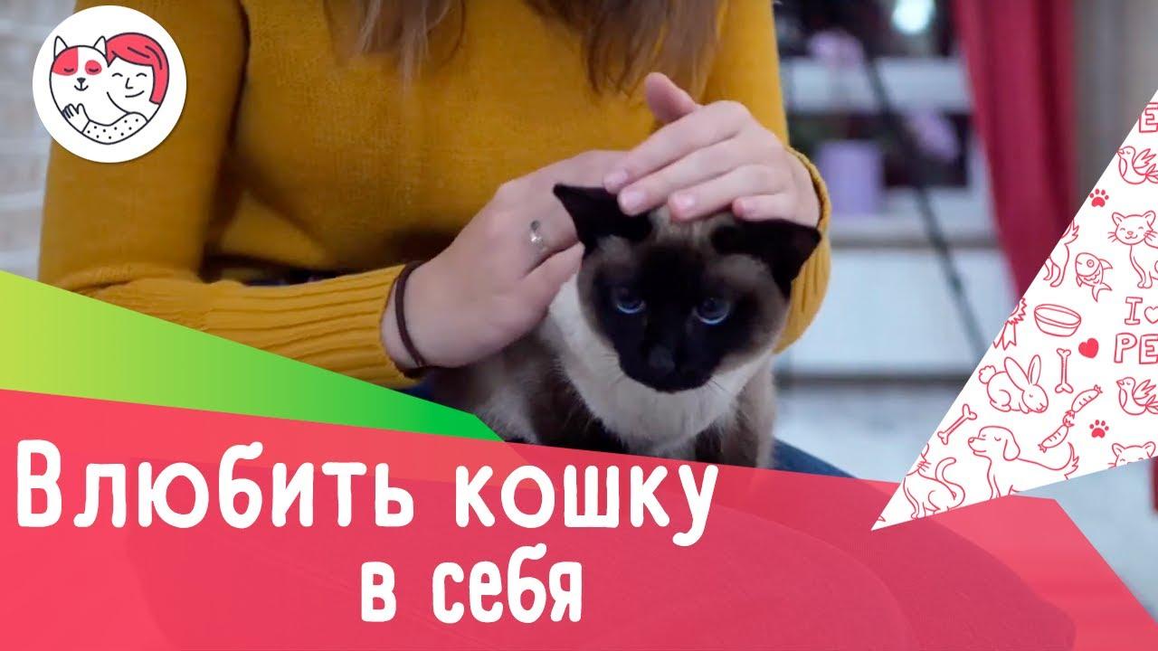Как влюбить в себя кошку: 5 лайфхаков