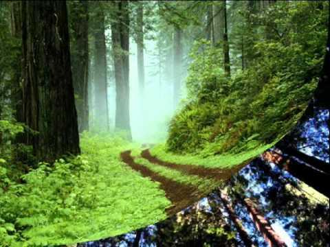 Šuma blista, šuma peva