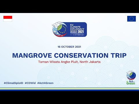 Mangrove Conservation Trip