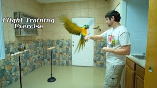 Parrot Morning Exercise Flight Training Routine