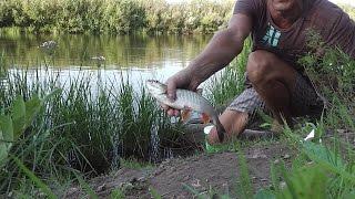 Ловля рыбы на пшеницу при ловли