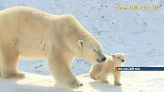 Медведица Колымана вывела из берлоги своего медвежонка