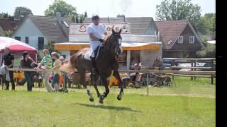 preview picture of video 'Reitturnier 2012 Schillerslage Impressionen I'