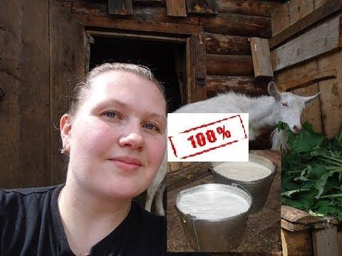 Как я нашла способ увеличить надой молока...
