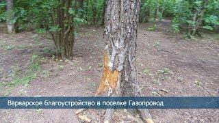 Варварское благоустройство в лесной зоне в Газопроводе