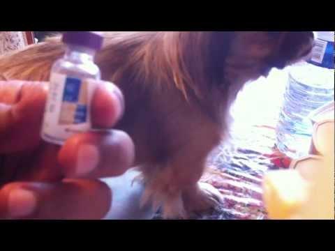 Médicaments pour abaisser linsuline