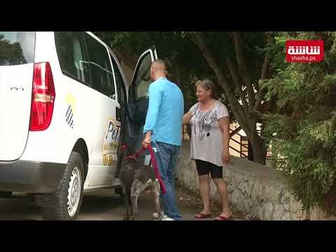 فيديو| خدمة جديدة في لبنان..سيارات أجرة لنقل الحيوانات الأليفة
