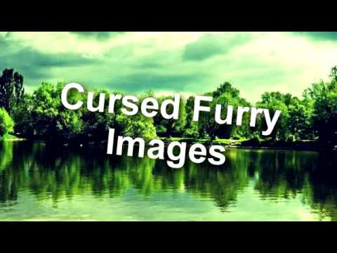 Cursed Furry Images || Furry Chart