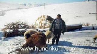Fırat Günes- Gulê ( Nergîs ) (www.awazaciwan.com ADRES DEGISTI (HUNERIKURD)