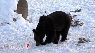 Mysterious wildlife - The story of Bear Watching Transylvania (English subtitle)