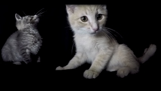 Thy Art Is Murder Loves Cats (Reign of Darkness)