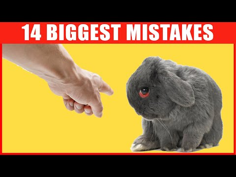 14 Common Bunny Care Mistakes That You Should Avoid