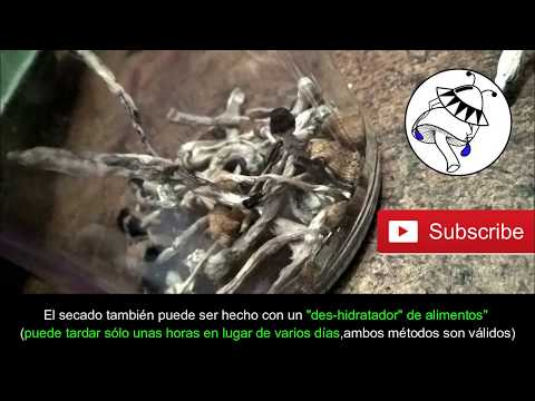 🍄SECAR HONGOS DE FORMA CASERA Y BARATA
