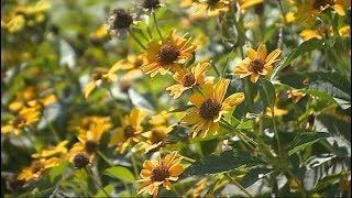 Осенняя аллергия: кто в зоне риска?