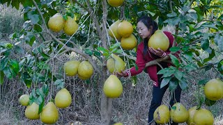Video : China : Chinese food from the pomelo fruit