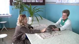 Куряне просят вернуть ветеринарный кабинет в сельхозакадемии