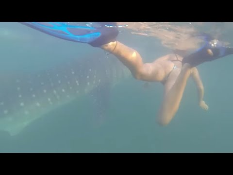 18-24_Swimming with Whale Sharks (sailing ZERO)