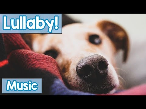 Lullabies For Dogs To Sleep To! Calm Your Dog And Help Them Have A Sound Sleep With This Music!
