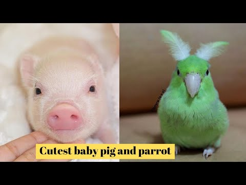 Cutest Pets in The world 🌎 | Supper funniest pets | Animal Planet Ever #17