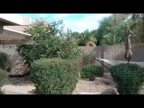 Citrus Tree Dead Top Mesa AZ Warners Tree Surgery 480 969 8808 UD12192018