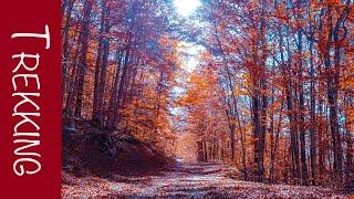 Trekking Prato di Campoli Foliage autunnale