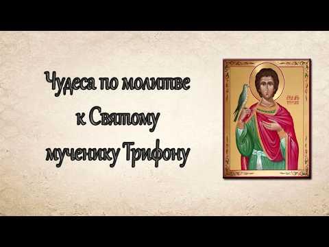 ❤ Чудеса Святого мученика Трифона