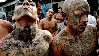 MS 13 Gang violence and Illegal Immigration