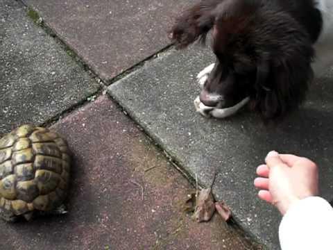 Hidde en schildpad