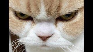Смешные Коты и Собаки 2019 - Лучшие Приколы с Животными №118