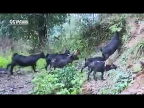 deryacik34's Video 140409575962 GEE9zli4eT4