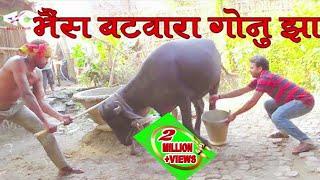 भैंस बटवारा गोनु झा भाई भाई मे Bhains Batwara gonu Jha comedy