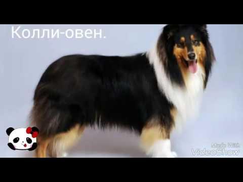 Собака какие года по гороскопу