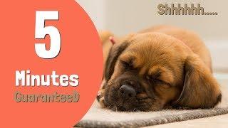 Sound to make Puppy Sleep Within 5 Minutes    Puppy Sleep Music