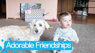 animale momente funny cu copii si animale