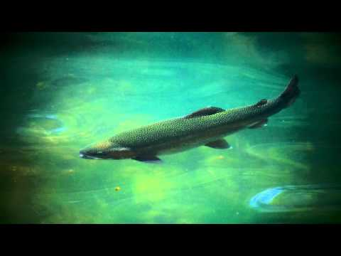 trout fishing tricks pond trout fishing fishing brown trout